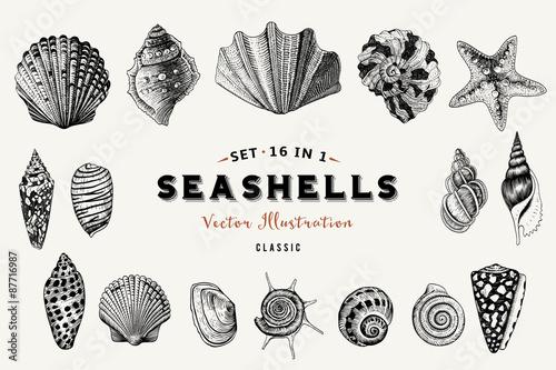 Set of vector vintage seashells. Nine black illustrations of shells on a beige background.
