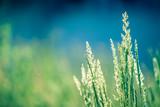 Fototapety Spring plants