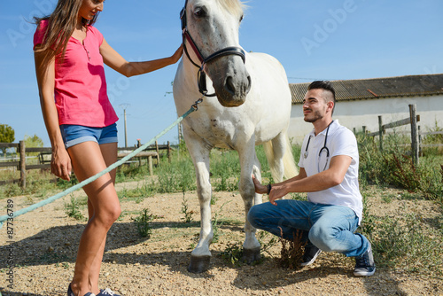 Fototapeta handsome young man veterinary taking care of a beautiful white and gray camargue horse