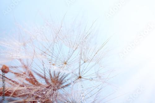 Beautiful dandelion with seeds, macro view - 87773755