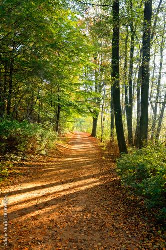Deutschland, Hamburg, Waldweg im Herbst