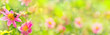 Banner  -  Garden with beautiful flowers and bumble bee