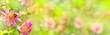 Leinwanddruck Bild - Banner  -  Garden with beautiful flowers and bumble bee