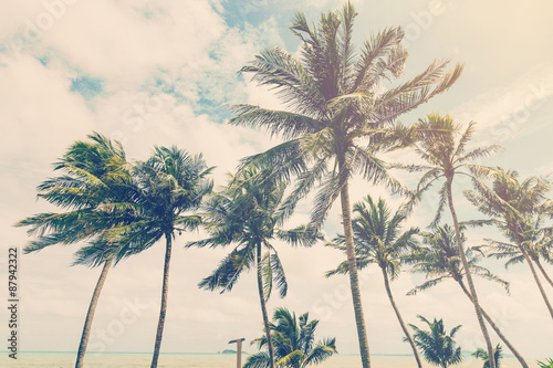 coconut plam tree on beach of nature background in vintage style - 87942322