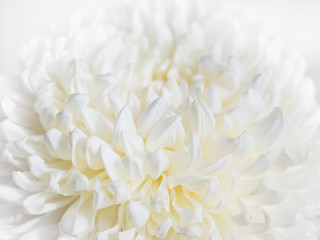 White Flower close up Abstract background