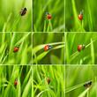 Beautiful ladybug on green grass