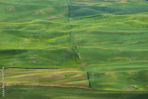Keuken foto achterwand Olijf The beauty of Farmland