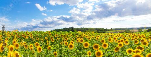 mata magnetyczna Sonnenblumenfeld - Panorama