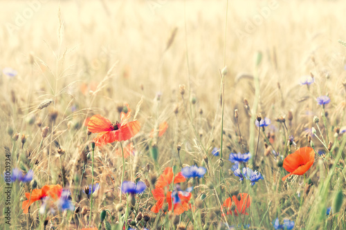 Composition with meadow flowers. Nice summer background. Poster