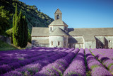 Fototapety Lavender in front of the old abbey of Senanque in Provence