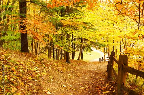 Tuinposter Honing Autumn scene