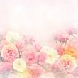 Obrazy na płótnie, fototapety, zdjęcia, fotoobrazy drukowane : Roses Background