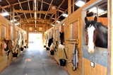 Horses at the stables  - 88203174