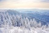 Fototapety Winterlandschaft Schwarzwald