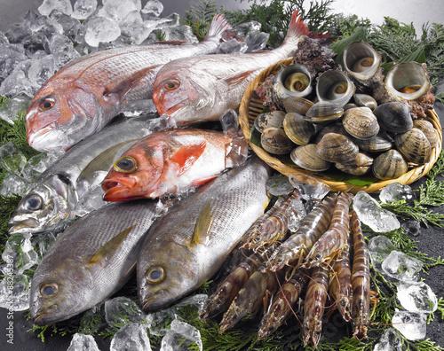 Billede 鮮魚集合