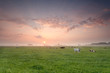 cattle herd on pasture at sunrise