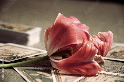 Tulip&tarot