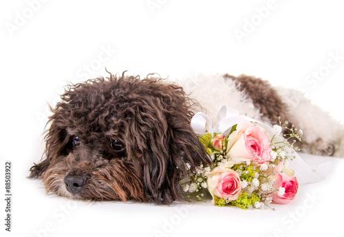 Kleiner Hund mit Blumenstrauss