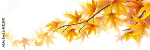 Autumn branch with maple leaves on white, vector illustration
