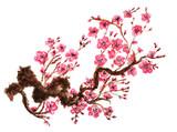 Fototapety Flowering branch of sakura. Isolated on white background