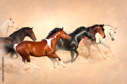 Fototapeta  Horse herd run gallop in desert at sunset