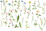 Fototapety Set of watercolor drawing herbs and flowers