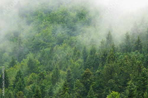 Fototapeta Misty forest