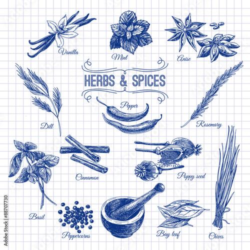 wektor ręcznie rysowane zestaw z zioła przyprawy. Vintage ilustracji.
