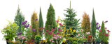Composition of shrubs - 88717305