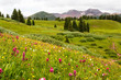 Colorado trail through wildflower filled meadow with mountains in the distance