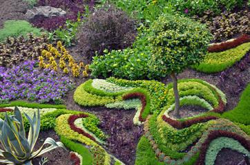 Kolorowy lato ogród kaktusów i kwiaty