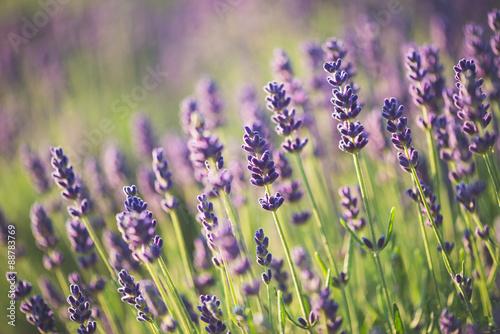 Aluminium Lavendel Lavender