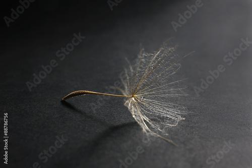 piekny-dandelion-z-woda-opuszcza-na-ciemnym-tle