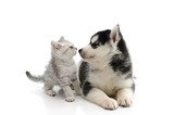 Cute puppy kissing cute tabby kitten on white background