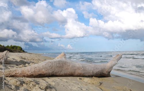 Foto op Canvas Noordzee Sandstrand auf Korsika