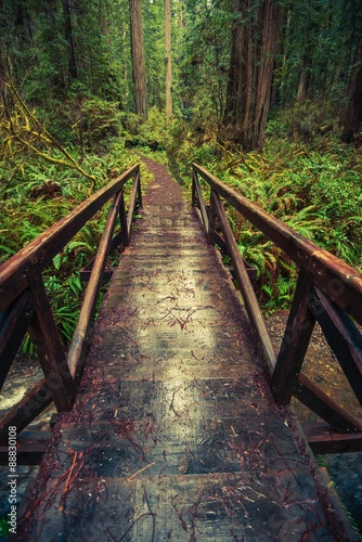 Wooden Trail Bridge - 88830108