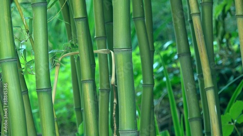 Green bamboo trees as background, bamboo forest detail, 4k uhd footage, 3840x2160, 2160p.