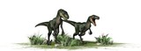 Two Velociraptors Dinosaurs     Wall Sticker