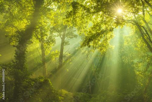 Zdjęcia na płótnie, fototapety na wymiar, obrazy na ścianę : The Forest of Heaven