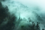 Fototapety misty forest landscape in the mountains
