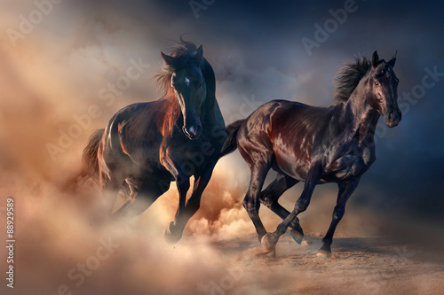 Two black stallion run at sunset in desert dust Plakát