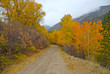 Golden Autumn colors in the Rocky Mountains