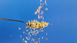 Wild Rice Dropped On Spoon Slow Motion. Shot at 60p conformed to 24p. poster
