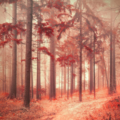 Fantasy red color saturated and foggy forest landscape. Picture was taken in south east Slovenia, Europe. © robsonphoto