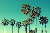 Palm trees at Santa Monica beach. Vintage post processed. Fashion, travel, summer, vacation and tropical beach concept. - Fine Art prints