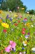 Blumenwiese - bunte Sommerblumen - 89052399