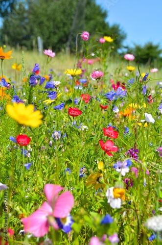 Obraz na Szkle Blumenwiese - bunte Sommerblumen