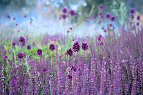 Fototapety, obrazy : Chive herb flowers on beautiful blur background.