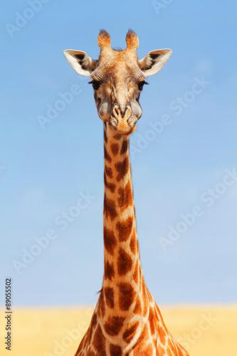 Plakát, Obraz Giraffe in Masai Mara