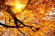 Sun shining in the golden autumn